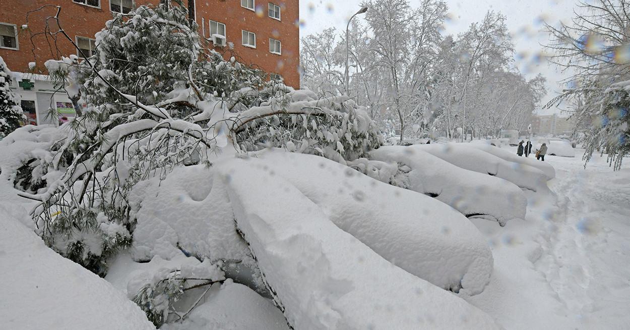 80 ezer fát kell kivágni Madridban a hatalmas havazás miatt