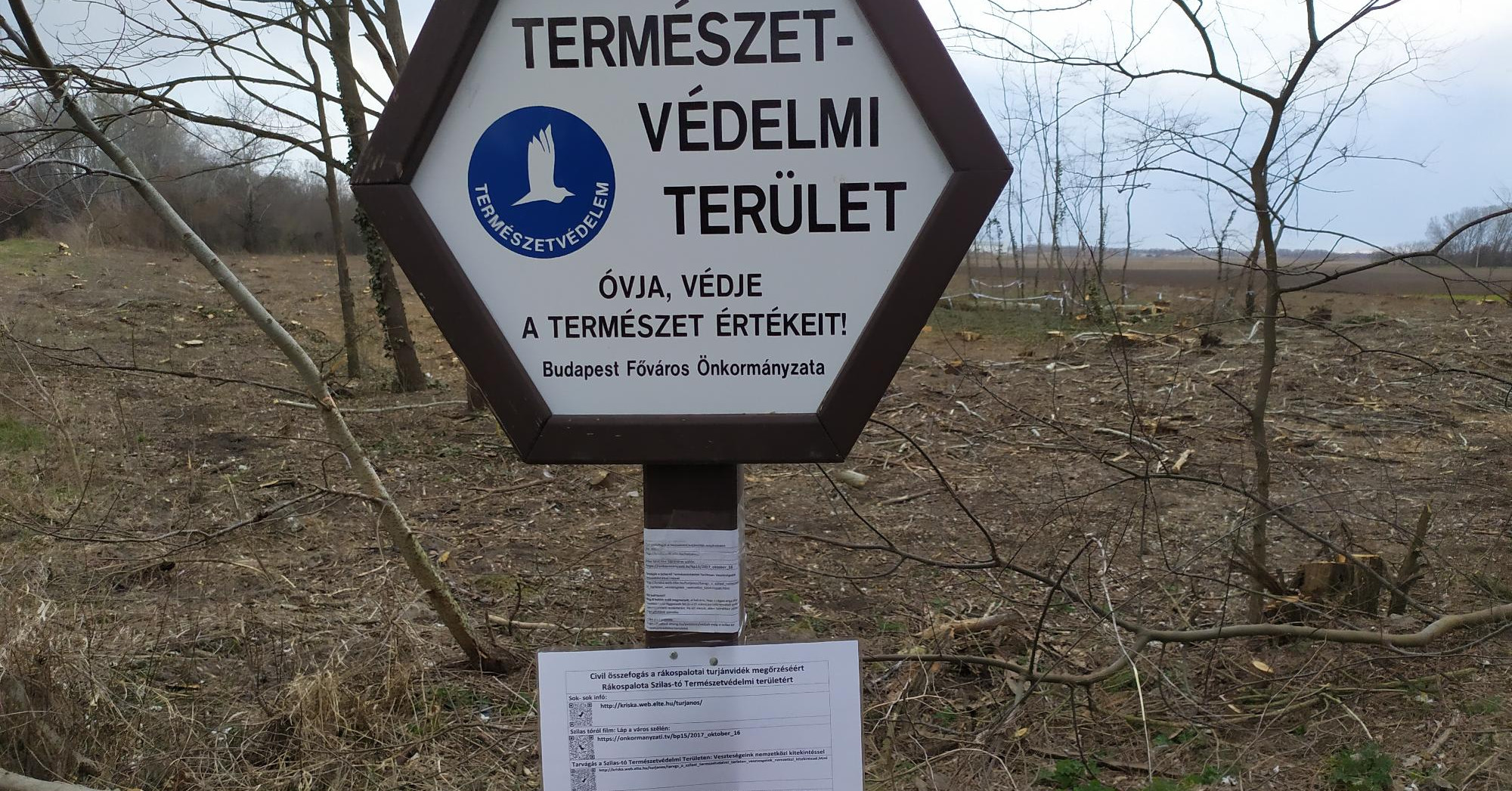 Kivágták a védett erdő felét a Szilas-patak mentén